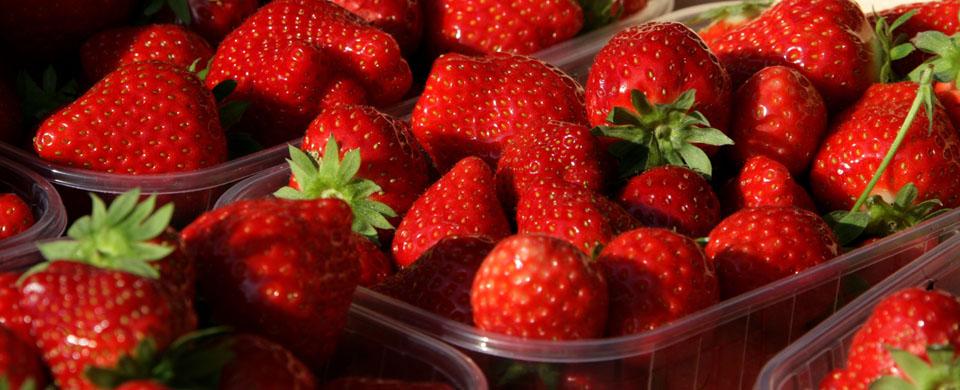 fraises-phalempin